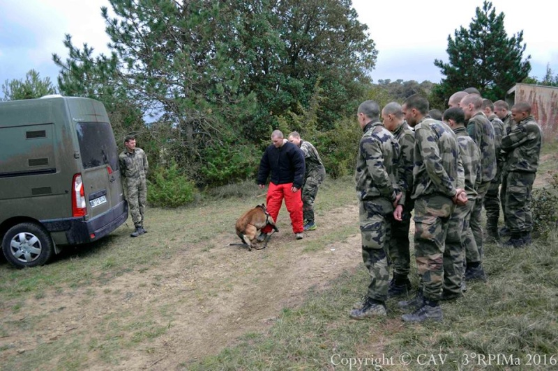 Animaux soldats - Page 6 2711