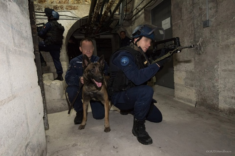 Animaux soldats - Page 6 30182