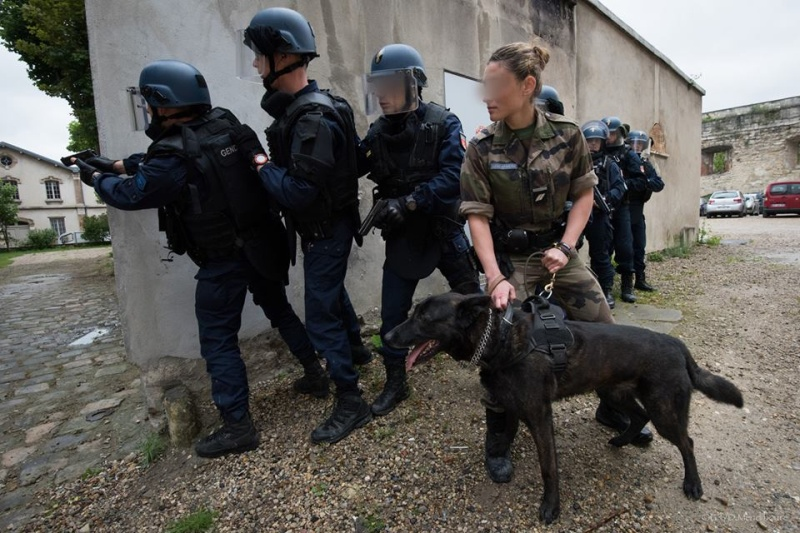 Animaux soldats - Page 6 32145