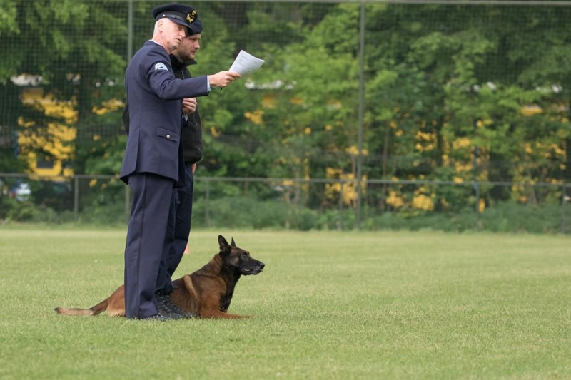 Animaux soldats - Page 6 33101