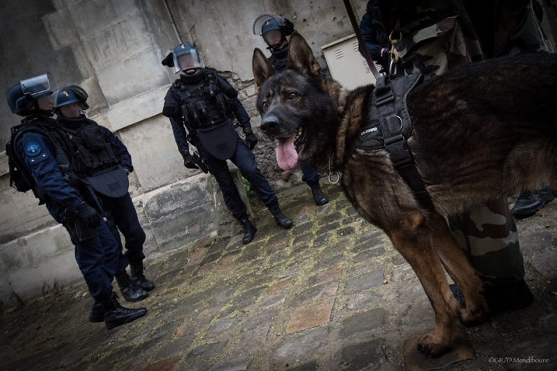 Animaux soldats - Page 6 3494