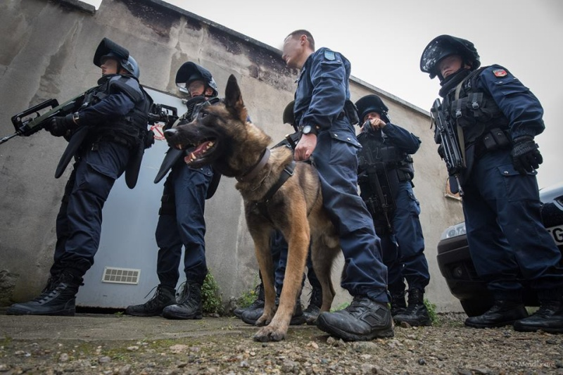 Animaux soldats - Page 6 3667