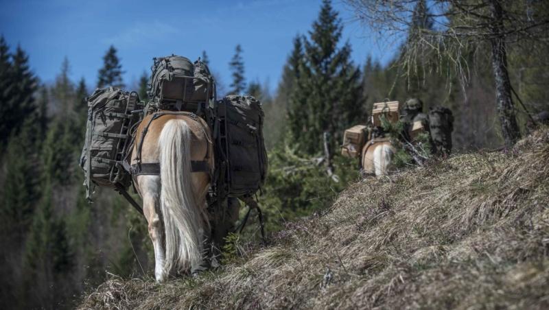 Armée autrichienne / Austrian Armed Forces / Österreichisches Bundesheer  - Page 5 4416