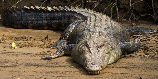 insolite Crocod12
