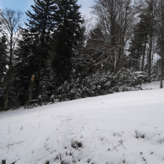 Tempêtes hivernales 2019-2020 20200211