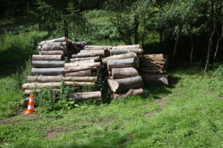 Production de bois de chauffage : la taille têtards (ou trognes, chapoules, charpoules...) Img_7610