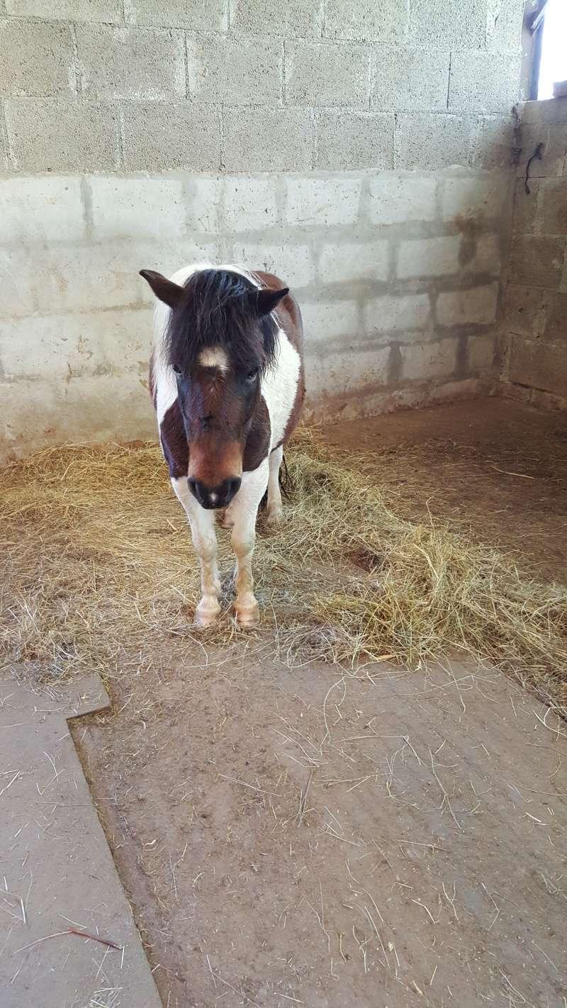 CANNELLE - ONC poney née en 2009 - adoptée en décembre 2013 par Catie - Page 3 08011