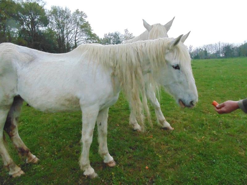 DONA - PRE née en 1987 - accueillie en septembre 2012 chez Pech-Petit - Page 4 Dona_110