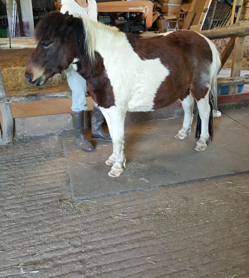 CANNELLE - ONC poney née en 2009 - adoptée en décembre 2013 par Catie - Page 3 Z1_cop10