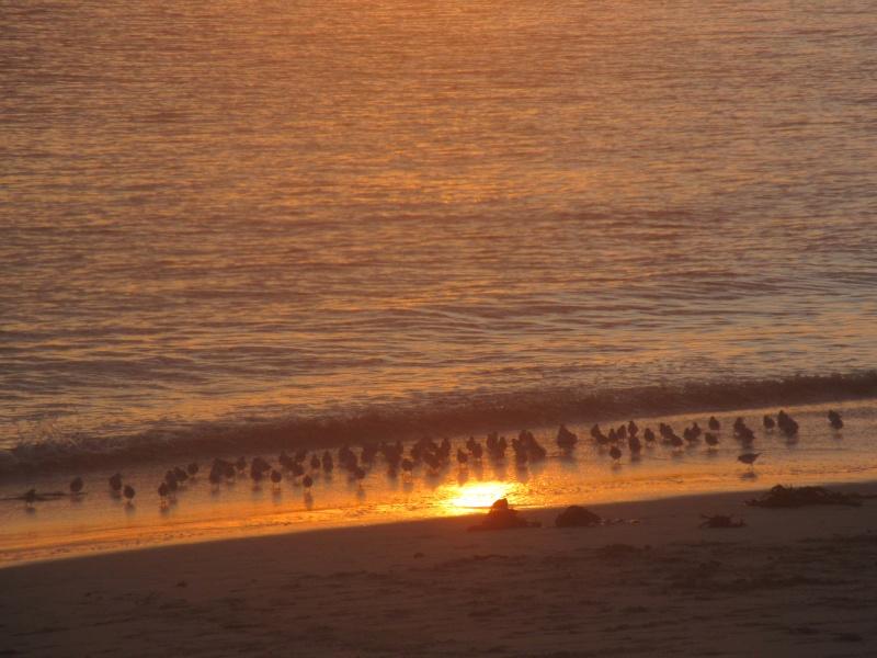 La plage aux romantiques !!!!! Img_2010