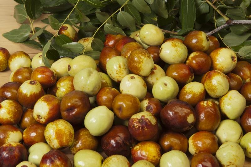 Fleurs,....fruit,.....tout ce qui se mange,...se boit....ou qui vient de la nature.......... - Page 14 X12_1010