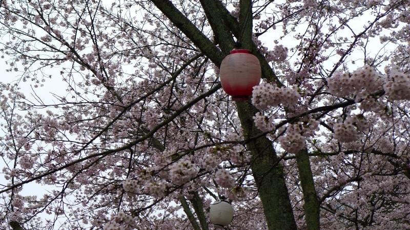 [TR] Yuki au pays des merveilles du Soleil Levant  Jour1118