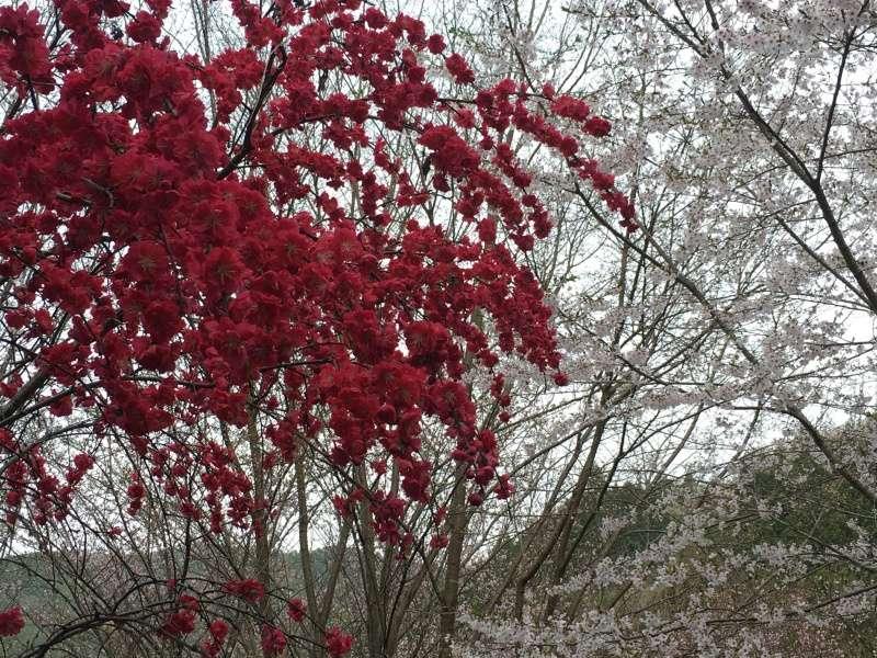 [TR] Yuki au pays des merveilles du Soleil Levant  Jour2_23