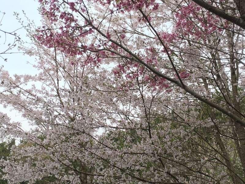 [TR] Yuki au pays des merveilles du Soleil Levant  Jour2_24