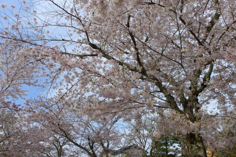 [TR] Yuki au pays des merveilles du Soleil Levant  Jour5_32