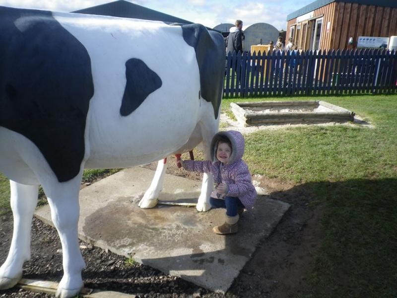 Macie milking a coo... 11218410