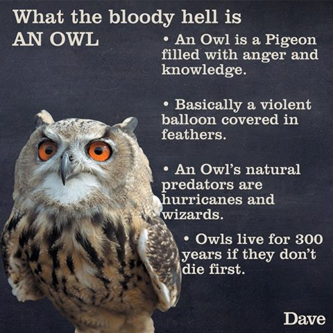 What is an owl? 12804610