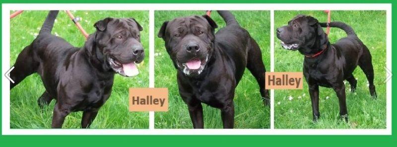 HALLEY Halley10