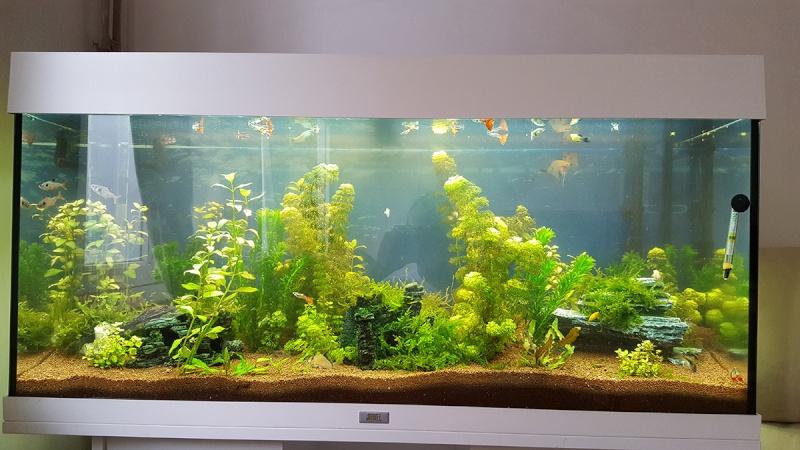 Paramètres eau + plante qui devient brune 20160410