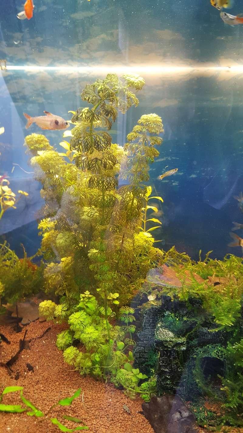 Paramètres eau + plante qui devient brune 20160412