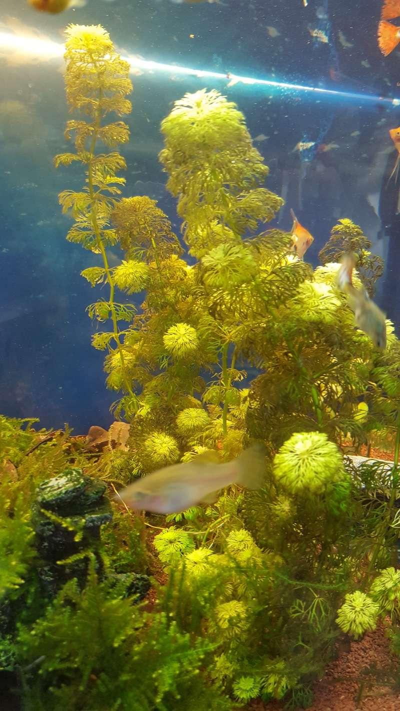Paramètres eau + plante qui devient brune 20160413