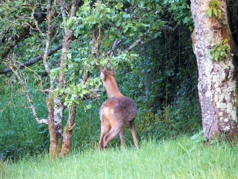Belles photos d'animaux c'est ici !  - Page 10 P5251212