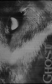 Ghost - Oméga - Mâle Ghost_11