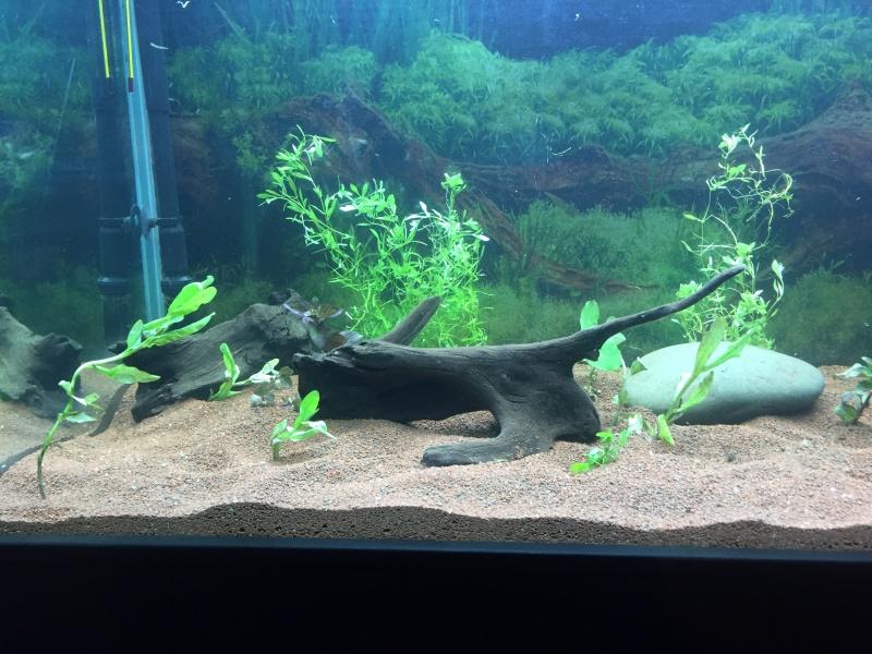 Fertilisation plantes de nos rivières Img_1432