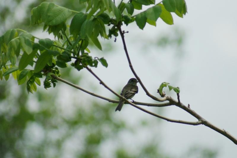 3 oiseaux... Parc_d57