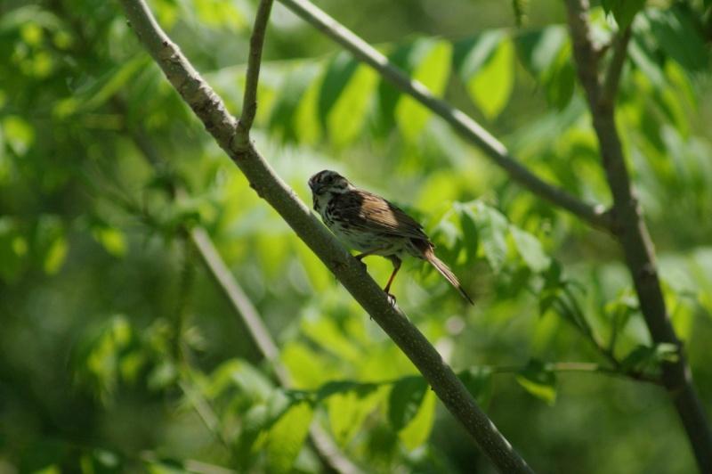 3 oiseaux... Parc_d58