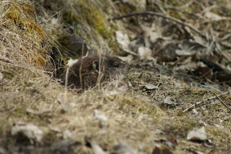 Une marmotte qui prend l'air... Parc_n20