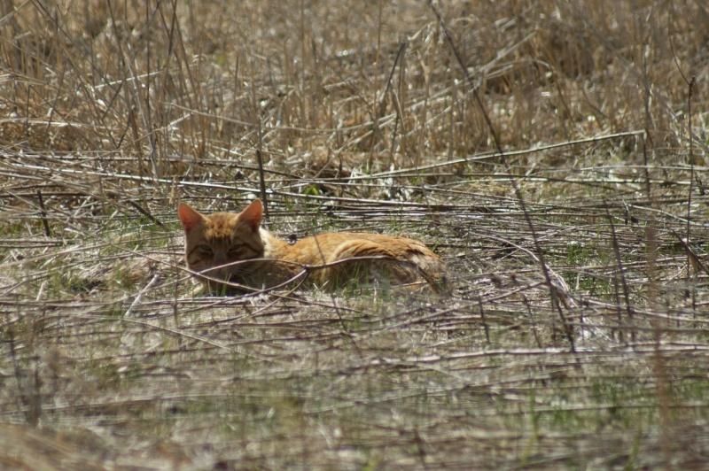 Le chat du Parc National Parc_n29