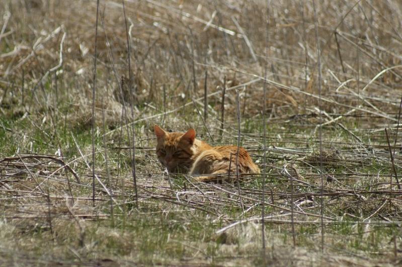 Le chat du Parc National Parc_n30