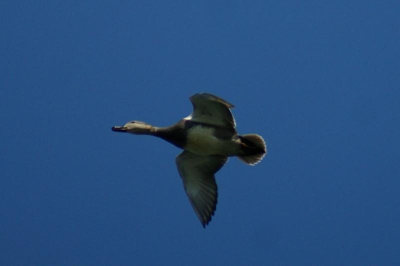 3 oiseaux... Parc_n41