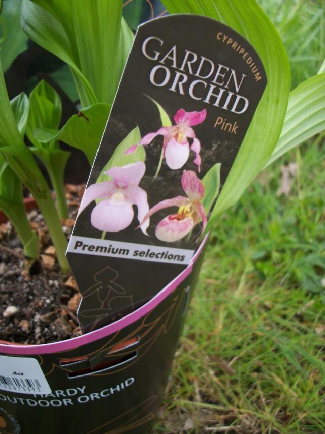 vente de cypripedium Photo_29