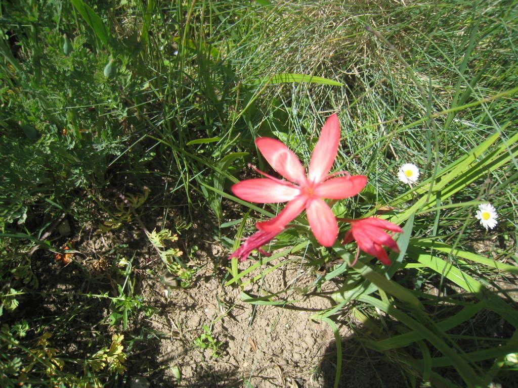 fleurs 2016 00119