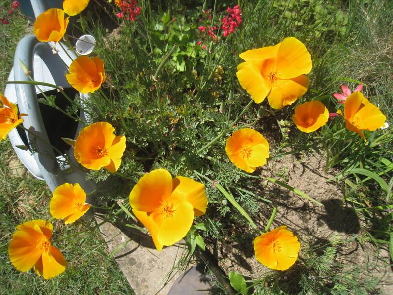 fleurs 2016 00214