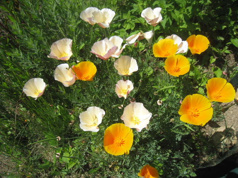 fleurs 2016 00315
