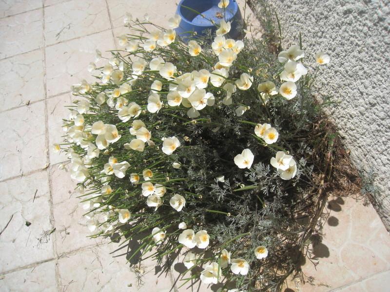 fleurs 2016 00415