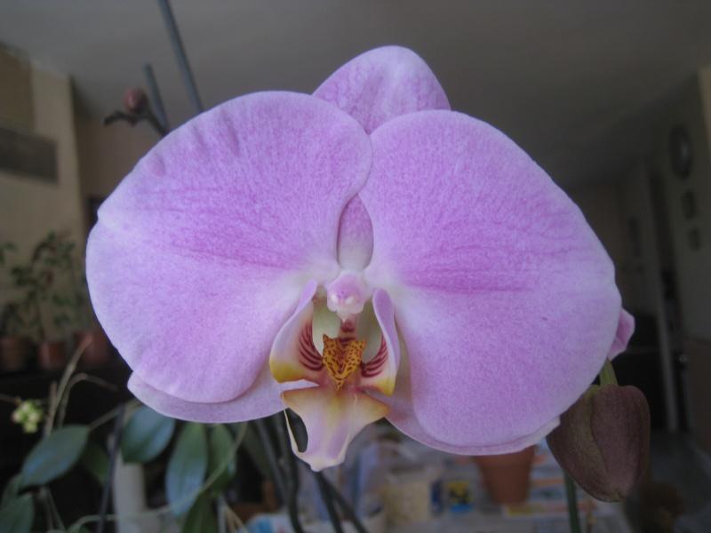orchidée 01210
