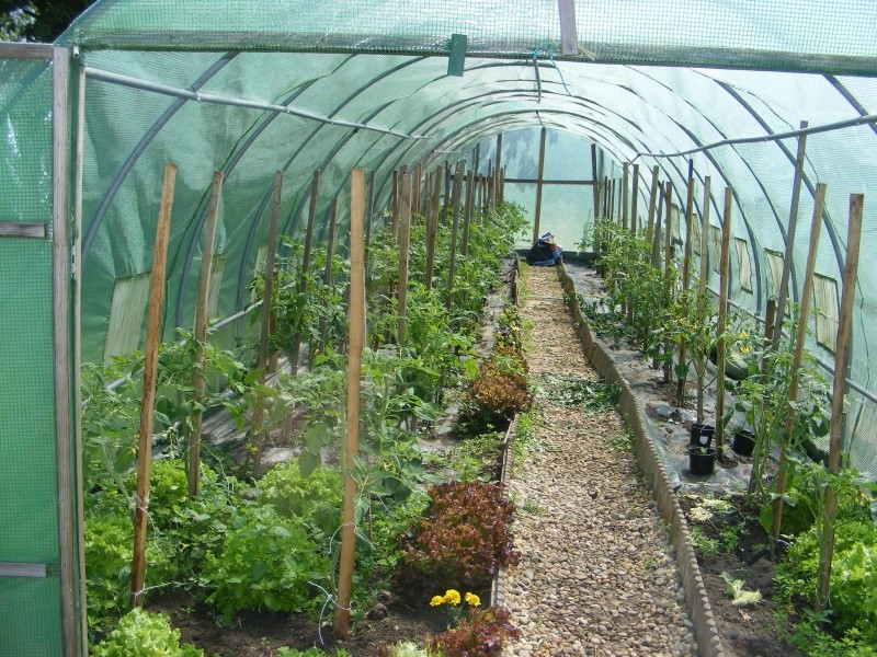 mon jardin cette année Dscf3110