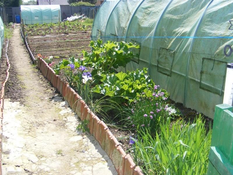 mon jardin cette année Dscf3112