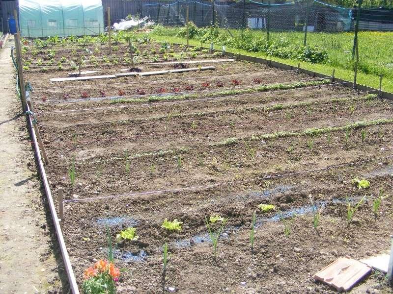 mon jardin cette année Dscf3113