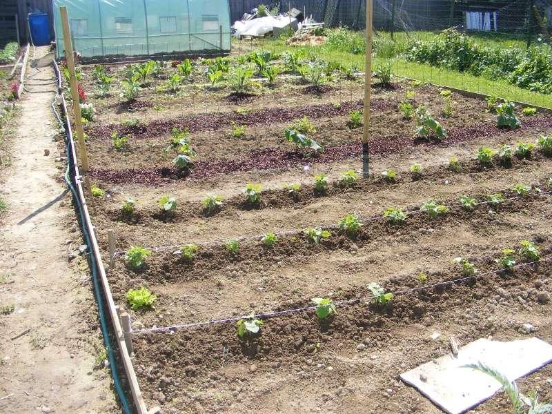 mon jardin cette année Dscf3114