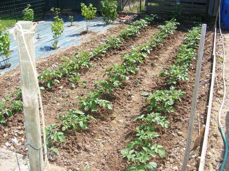 mon jardin cette année Dscf3115