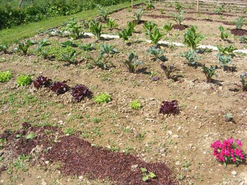 mon jardin cette année Dscf3116
