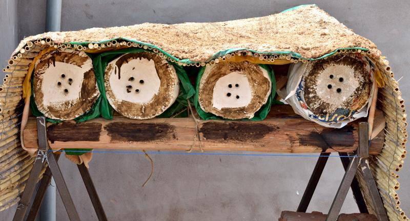 Les auxiliaires du jardinier : l'abeille noire (Apis mellifera mellifera) Dsc_3010