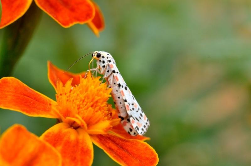 Les bêbetes de mon jardin Dsc_4811