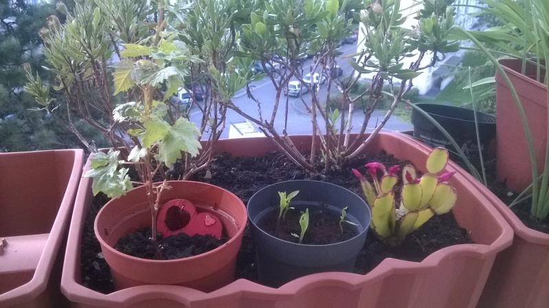 mes plantations Mai__016