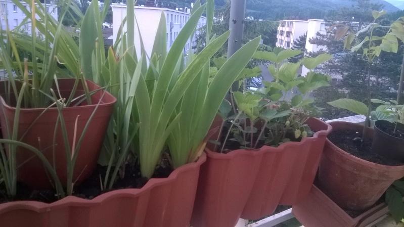 mes plantations Mai__017